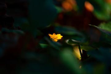 Fleur jaune dans un l'ombre de la forêt