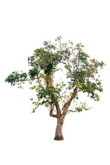 Beautiful tree on a white background Natural concept