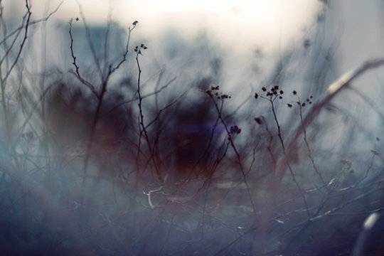 Dark abstract blurred background with branches of plants, whose branches partially hidden by the mist