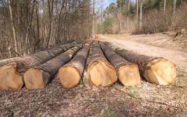 troncs de chênes abattus au bord du chemin en forêt