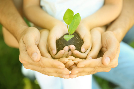 Family holding soil with green plant in hands, closeup. Volunteer community