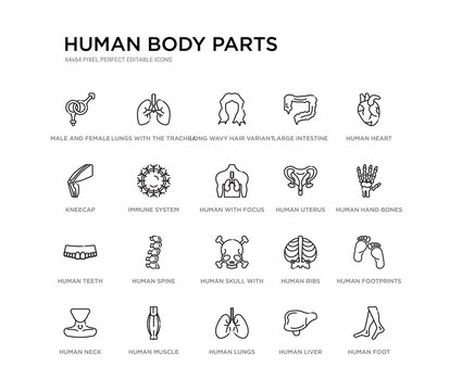 set of 20 line icons such as human skull with crossed bones, human spine, human teeth, uterus, with focus on the lungs, immune system, kneecap, large intestine, long wavy hair variant, lungs with