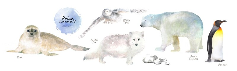Watercolor illustrations of polar northern animals: seal, white owl, arctic fox, polar bear, penguin, isolated drawings by hand