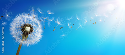 Wall mural Dandelion With Seeds Blowing Away Blue Sky