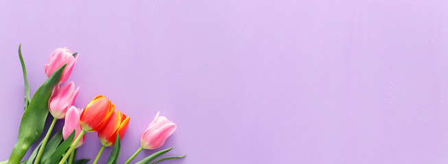 bouquet of orange and pink tulips over pastel purple wooden background. Top view. banner
