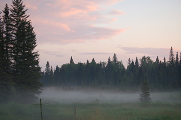 mist on the marsh