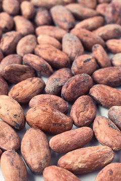 Whole bitter cocoa beans