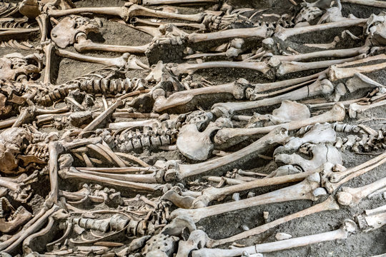 Many skeletons in an open grave. Human bones in the mass grave. Archaeological research with victims on a medieval battlefield.