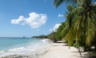 Rajska plaża. Biały piasek, palmy i błekitny ocean.