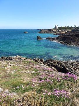 Côte rocheuse à Saint-Malo en Bretagne, bord de mer à Rothéneuf avec des fleurs de printemps (France)