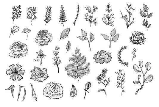 Floral collection of vector illustrations. Flowers, branches, leaves on white background