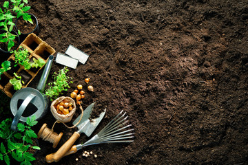 Gardening tools and seedlings on soil Fototapete