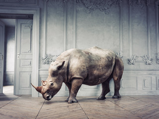 Photo sur Aluminium Rhino wild rhino in the luxury room