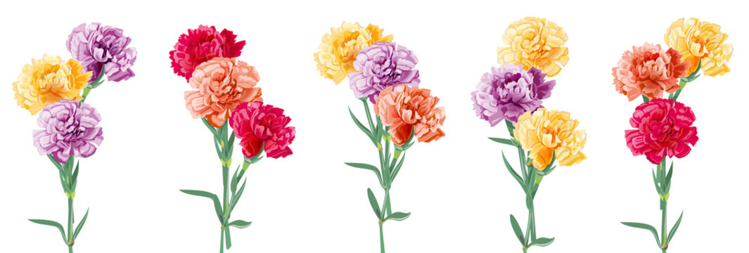 Set bouquets of carnation schabaud. Purple, yellow, red, orange flowers, white background. Digital draw, illustration for Mother's Day, Victory day in watercolor style, panoramic view, vector
