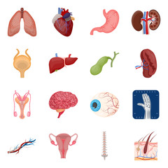 Vector illustration of body and human logo. Collection of body and medical stock symbol for web.