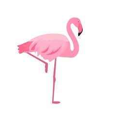 Pink flamingo stands on thin legs on a white background. Summer design