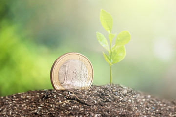 Coin with plant growing on top for business, saving, growth, economic concept