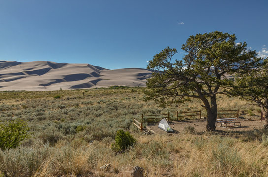tent under the tree in Pinon Flats Campground against sand dunes (Great Sand Dunes National Park and Preserve, Saguache county, Colorado)