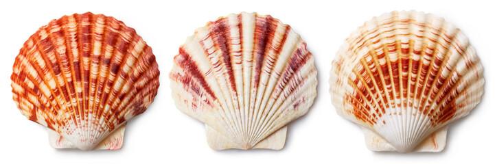 Set of sea shells, isolated on white background