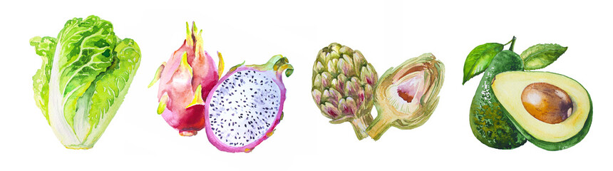 Watercolor hand draw illustration with avocado, chinese cabbage, artichoke and dragon fruit, inspired by exotic fruits, with white isolated background