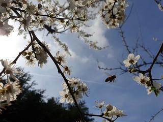 Insekten im Frühling