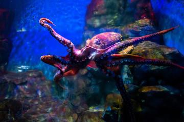 Octopus at Langkawi Waterworld