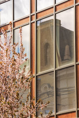 apple blossom in the town. beautiful urban scenery in springtime. blooming twig in front of a modern building with glass facade reflecting old architectural fragment