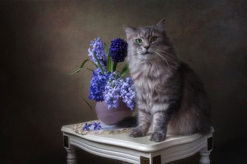 Still life with bouquet of hyacinths and cute gray kitty