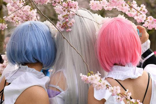 Cosplay Girls unter Kirschblüten