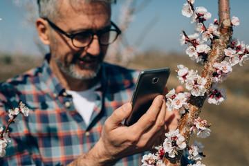 gardener using cellphone in orchard