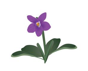 Viola flower. vector illustration