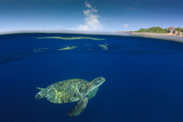 Wall Mural - Green Sea Turtle over under split photo