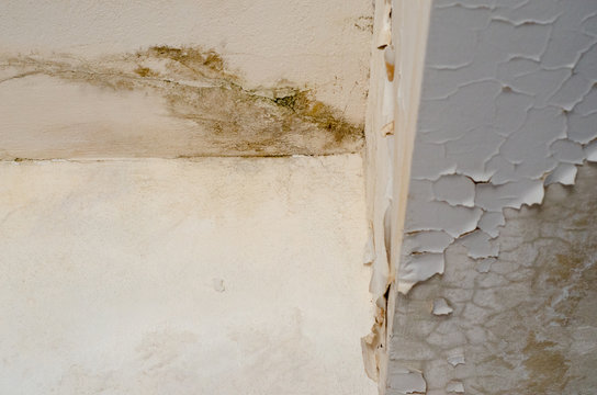 Unhealthy mold damaged walls, ceilings and Floors