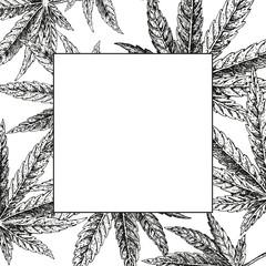 Hand drawn hemp background. Cannabis leaf. Vector sketch of marijuana. Layout design for packaging