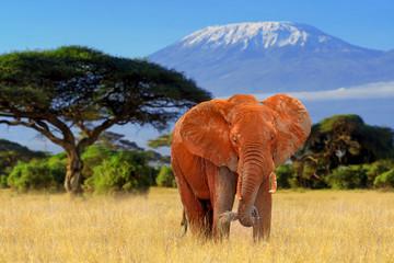Elephant in National park of Kenya Wall mural