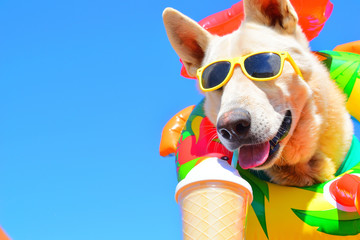 party dog with sunglasses