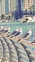 seagulls are sitting on the railing by the river on a sunny summer day