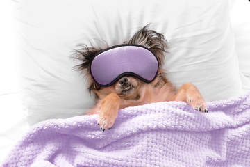 Cute dog with sleep mask in bed