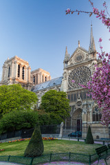 Wall Mural - Paris, Notre Dame cathedral with spring trees in France