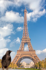 Wall Mural - Raven looking at the Eiffel Tower in Paris, France