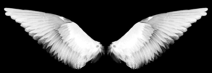 white wings on a black Wall mural