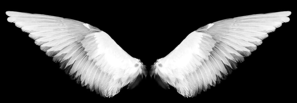 white wings on a black