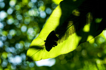 A butterfly sits on a leaf at the Butterfly Park on Sentosa Island, Singapore.