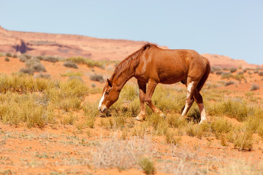 Wild horse in Monument Valley