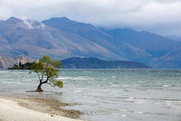 A tree in Lake Wanaka, New Zealand