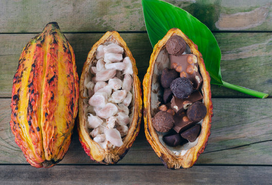Cob of cocoa and pieces of chocolate on wooden background. Space to copy.