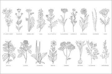 Various medicinal plants and flowers set, monochrome sketch hand drawn vector Illustrations on a white background