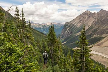 Man hiking through forest in Banff National Park, Alberta, Canada Wall mural