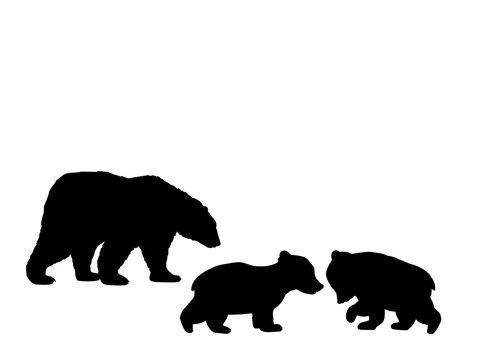 Bear family two bear cubs black silhouette animals. Vector Illustrator.