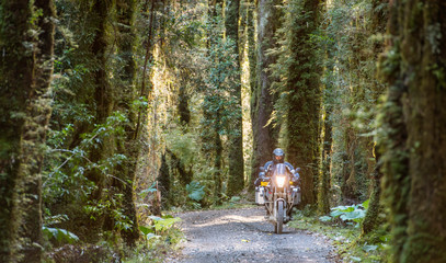 Man on touring motorcycle riding through forest